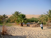 An oasis in the Siwa Desert
